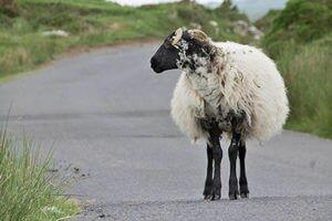 Irland bewusstweg reisen
